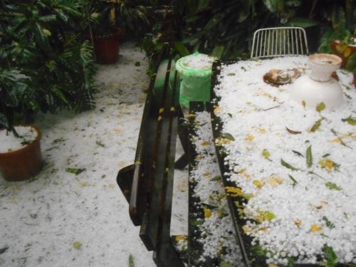 The backyard. We're not having dinner outside tonight.