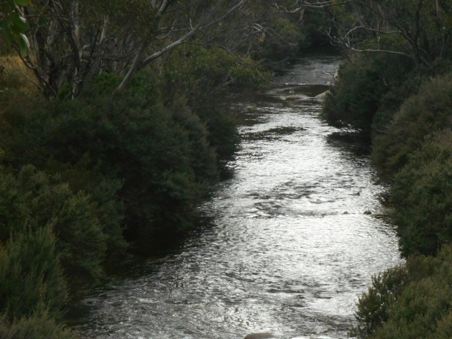 The mighty Thredbo River.