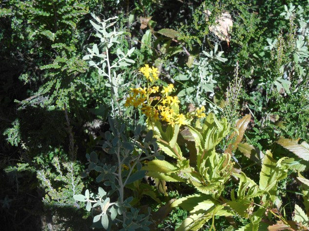 More alpine flora...