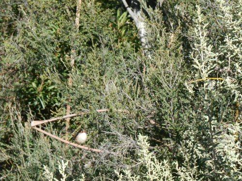Can you spot the wren?