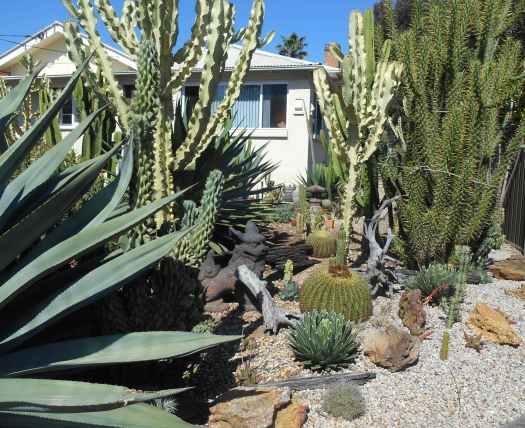 cactus garden fairfield