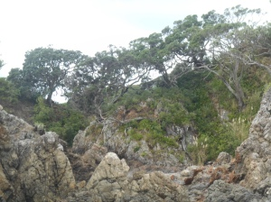 The craggy rocks between Oneroa and Little Oneroa
