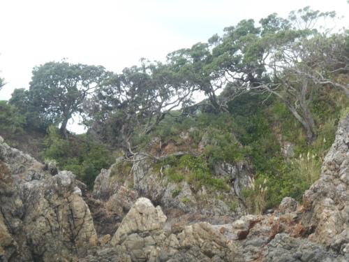 The craggy rocks between Oneroa and Little Oneroa