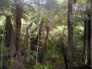 Strolling into a fern shaded gully