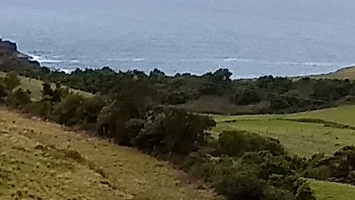 Looking out of the marquee at Bush Bank and across the cow paddocks to the Pacific Ocean